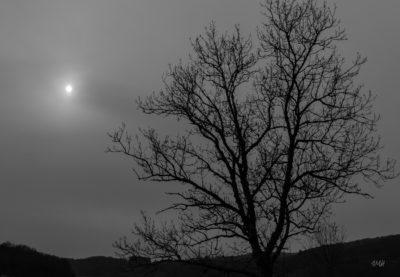 Sous un ciel hivernal opaque