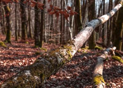 Mort en forêt