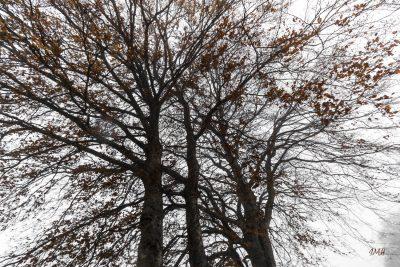 Fin d'automne vers Cambon-et-Salvergues