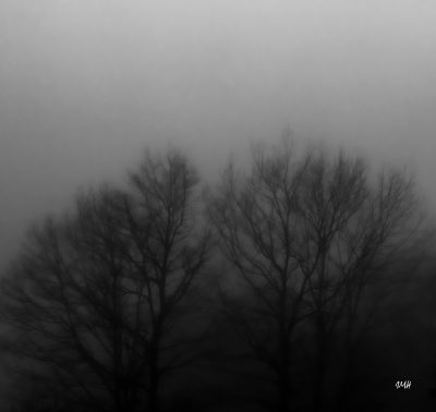 Flou d'un matin hivernal