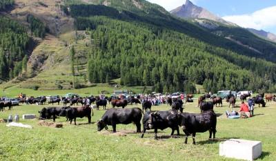 Cogne Val d'Aoste 2