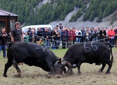Cogne Val d'Aoste 15