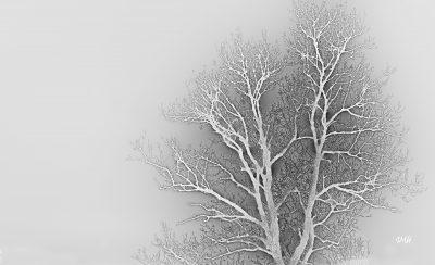 Surréalisme hivernal