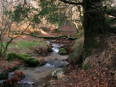 Ruisseau au-dessus du lac de Vesoles (ancienne collection)