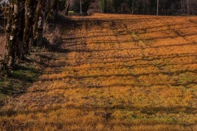 """Herbicide + pesticide + fongicide = homicide planétaire = suicide collectif (ici, un """"judicieux"""" dosage d'herbicide avant labours à l'entrée du village de Nages-Tarn, en novembre 2015)"""