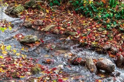 Ruisseau en technicolor