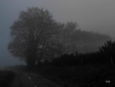 Un matin, route de Cambon-et-Salvergues