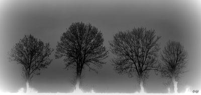 Sentinelles dans la brume (2) N&B