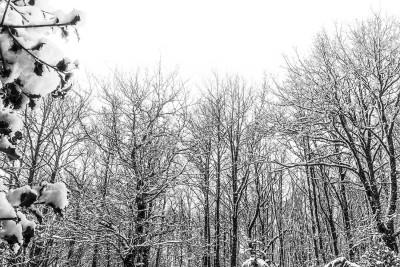 Hiver spectral en forêt N&B