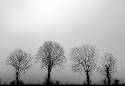 Sentinelles dans la brume (1) N&B