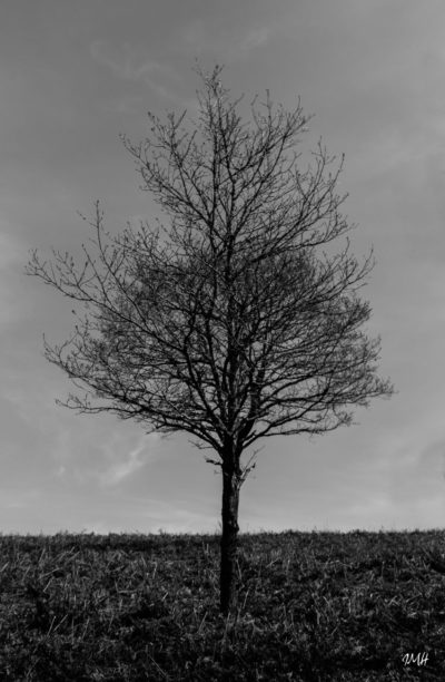 Un arbre peut en cacher un autre