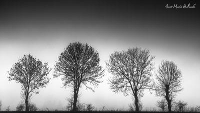 Sentinelles dans la brume  N&B