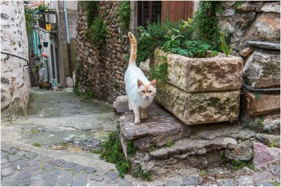 Le chat d'Olargues