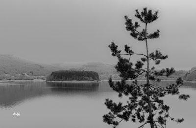 Lac du Laouzas. Le pin et l'île aux serpents