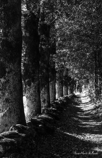 Le sentier de Marthe à Rouvières version 2