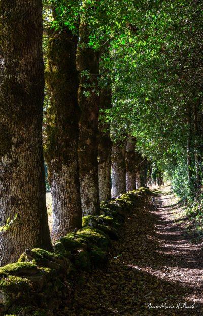 Le sentier de Marthe à Rouvières version 1
