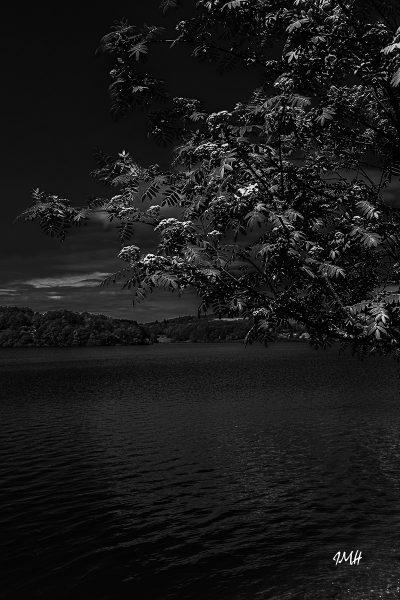 Lac du Laouzas. Le sorbier
