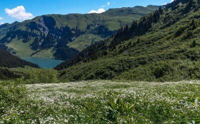 Tapis floral au-dessus du lac de Saint Guérin