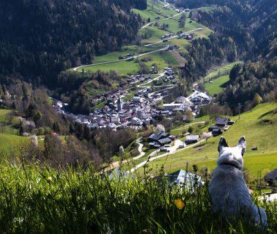 Le chien Bob contemple Beaufort-sur-Doron