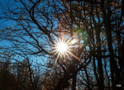 Capture  solaire. Automne dans le Rouayras