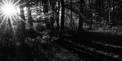 Soleil rasant en lisière de forêt