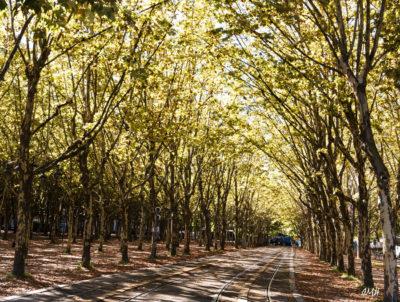 Bordeaux. Perspective d'automne devant une station de tramway