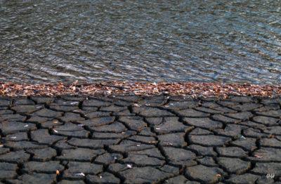 Lignes. Lac du Laouzas en Haut Languedoc, basses eaux 6