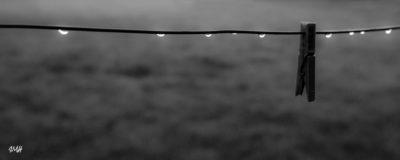 Lignes. Dans le Perche, après la pluie