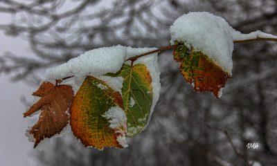 Hiver. Dernières feuilles
