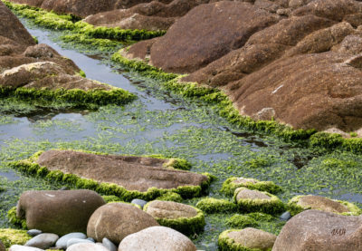 Bretagne en baie d'Audierne. Algues à marée basse (2)