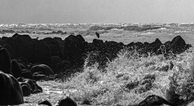 Bretagne en baie d'Audierne. Echassier à marée montante